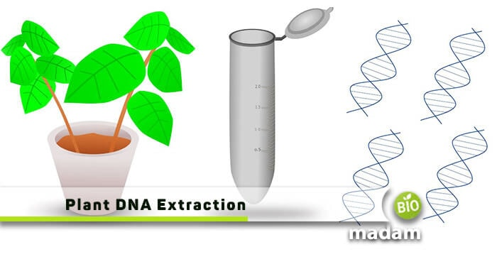 Plant DNA Extraction