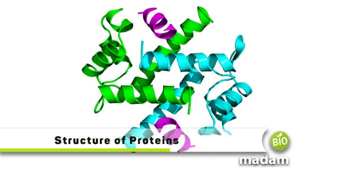 Structure and Classification of Proteins