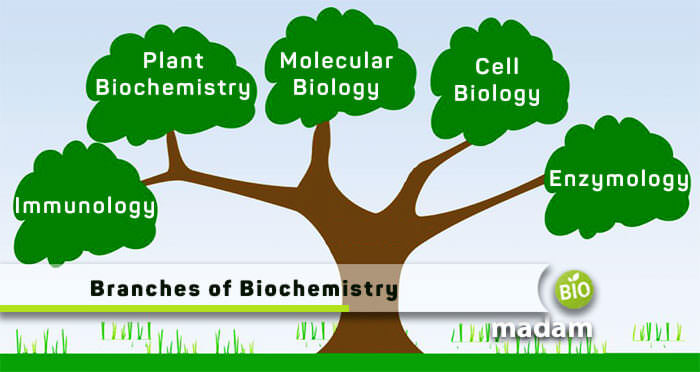 Important branches of biochemistry