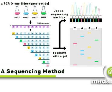 DNA-Sequencing-Method