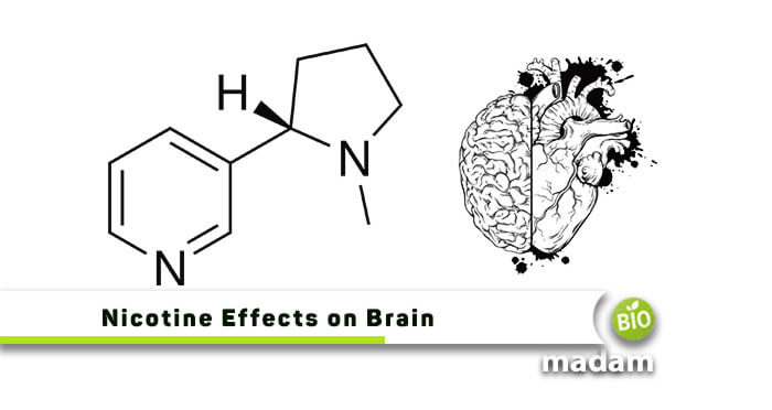 Nicotine Effects on Brain