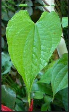 The Parts of Leaves in the Angiosperms