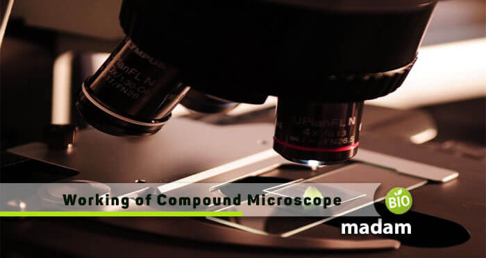 Working Mechanism of Compound Microscope
