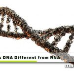 How is DNA Different from RNA