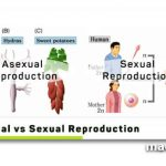 Sexual-vs-Asexual-Reproduction