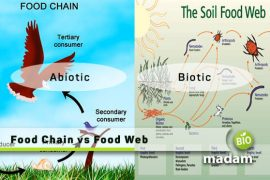Food-Chain-vs-Food-Web