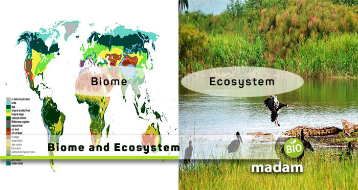 Biome-and-Ecosystem