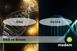 DNA-and-Genes